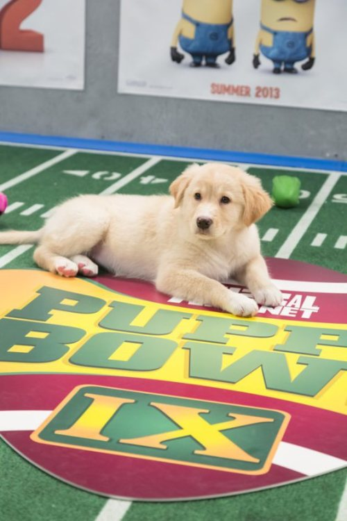 Where am I watching the Puppy Bowl Sunday?