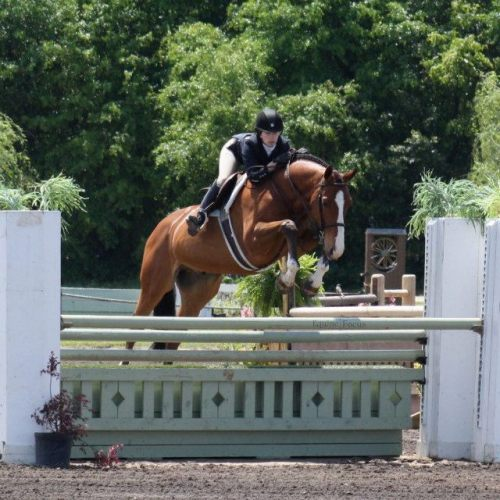 floridariding:  Davinci ❤  Hey, this is my horse! Pretty boy DV trying hard as always.