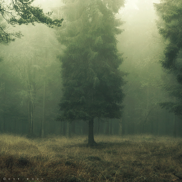iamthewoodendoors:  Veiled in a Dream II by =Oer-Wout