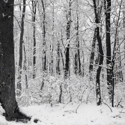 A Wintery Walk in the Woods.   #snow #snowinmarch #snapseed #winter #spring #springwonderland #landscapes #landscape #tree #trees #blackandwhite #pattern