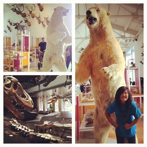 #stella #polarbear #love  (at  Natural History Museum of Los Angeles County )