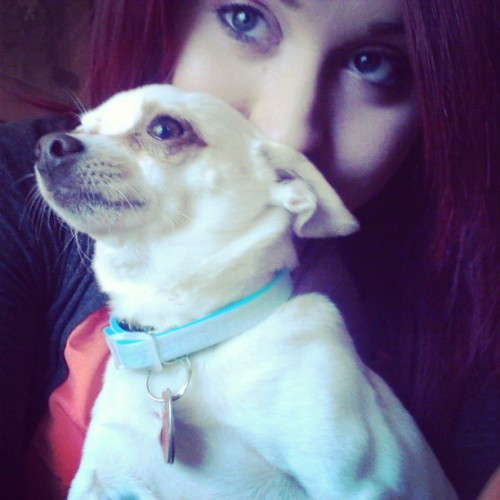My chihuahua baby. #puppy #dog #chihuahua #lesbian #redhair #dyke #tattoos #ink