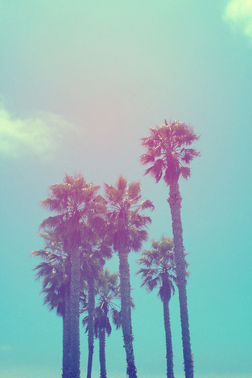 milouh:  Tumblr on We Heart It. http://m.weheartit.com/entry/61634534/via/its_dani