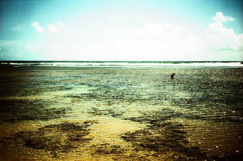 Lonely dog, 2013. by Editorama on Flickr.Camera e Filme não informados #FlickrGroupQueimandoFilme http://www.queimandofilme.com