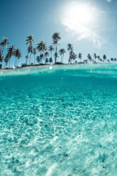 Crystal clear water, blue skies and tropical palm trees