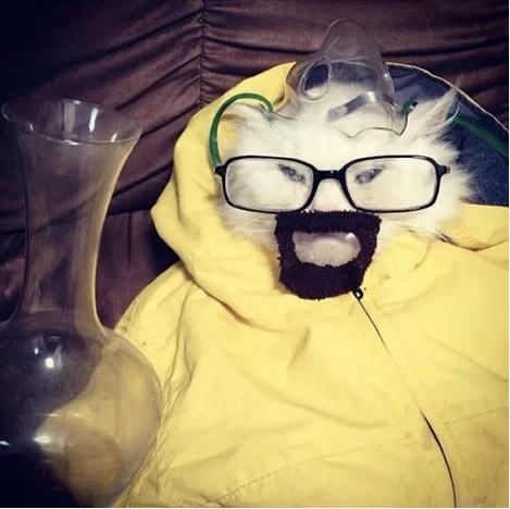 Because the only thing better than Breaking Bad is Breaking Bad Cat!… He is, the one who scratches.