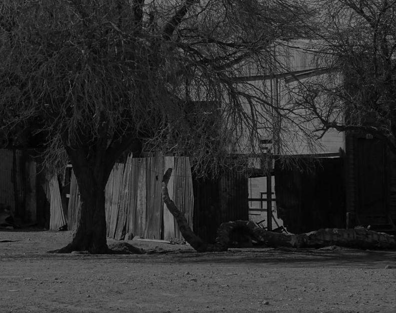 suicide tree #photography#photoart#tumblr#rare#strangeart