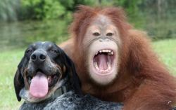 The Dog and the Orangutan