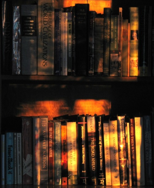 Bookshelves in Late Afternoon, photo by 336BC ©2011
