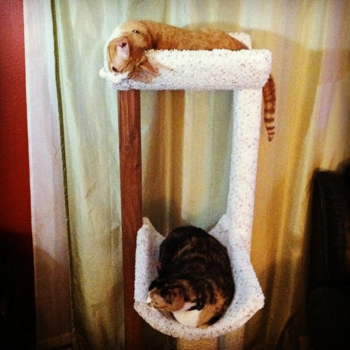 adtothebone:  Cat Tower Status: Tolerable