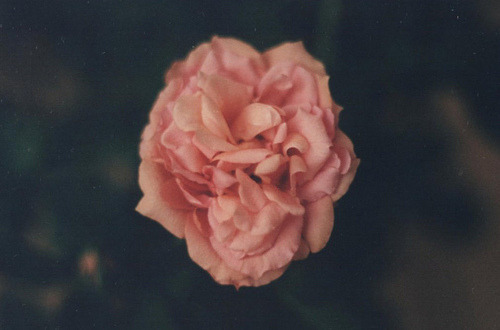 indie | Tumblr on We Heart It. http://weheartit.com/entry/47102599/via/whereiswonderland