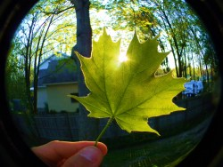 discuntinq:  lexifey:  discuntinq:  like my leaf?  luv ur leaf  MY LEAF IS ON MY DASH screams