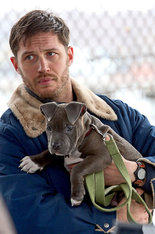 prettyaxes:  Tom Hardy