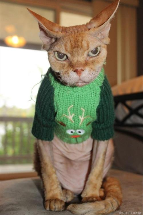 "catsbeaversandducks:  ""It's… perfect. Thank you, Grandma."" Photo via The Leaking Bucket List"