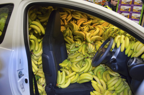 sometimes i feel like a car full of bananas