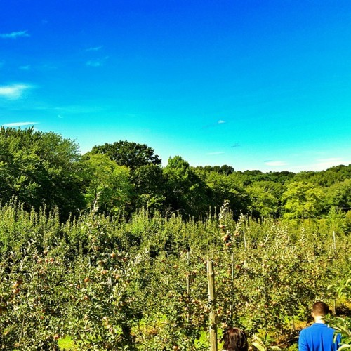 It's an apple-pickin kind of day! (at Honey Pot Hill Orchards)