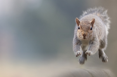 The Run. Photo by Stefano Ronchi