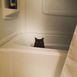 Walk in to find cat in tub #cat #derp #bath