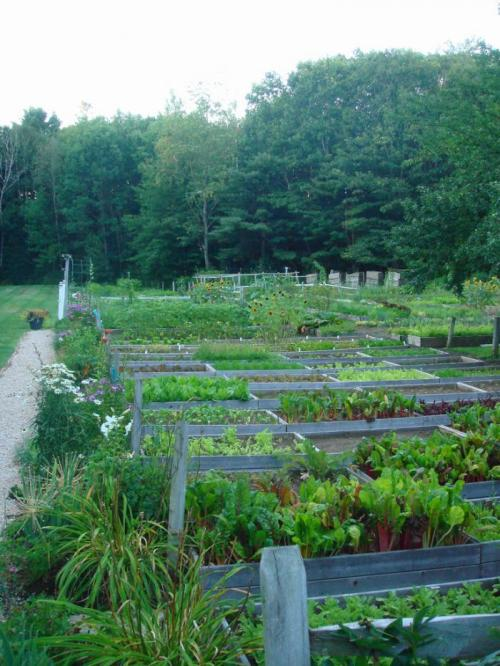 ediblegardensla:  Growing up, I spent summers on the coast of Maine with my family. At the end of summer we would gather for a meal at Arrows.  This is their garden, just behind the restaurant.  All of the produce used in the restaurant is grown here.
