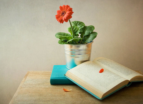 "Flor y libros by Aramol"" on Flickr."