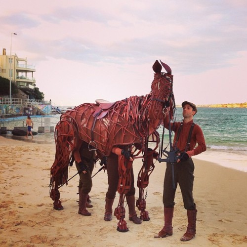 War horse (at North Bondi RSL)