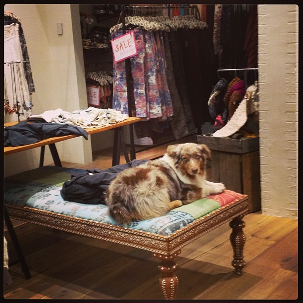 Lucy gets cozy @freepeople #dogmodel #notforsale