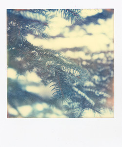 ejgmedia:  © Eliot J. Grigo. Pine on a cold winter day. Shot with a SX-70.