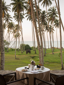 condenasttraveler:  40 Rooms, 40 Views | Amanwella, Tangalle
