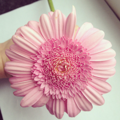 puhcific:  qassionfruit:  flir-t:  ✿  what kind of flower is this?   ^ I think it's a zinnia before it finished blooming bc zinnias have like a million different layers of petals :)