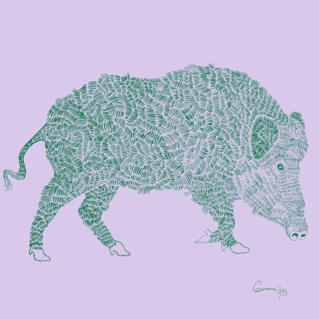 wild boar. drawing by geirarne/ballad of the dyeing dart frog 2013