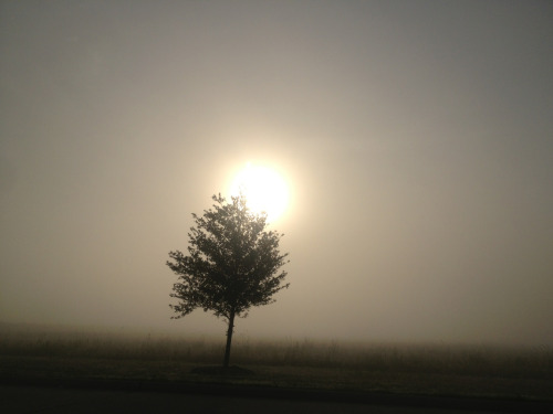 Sunshine and Fog