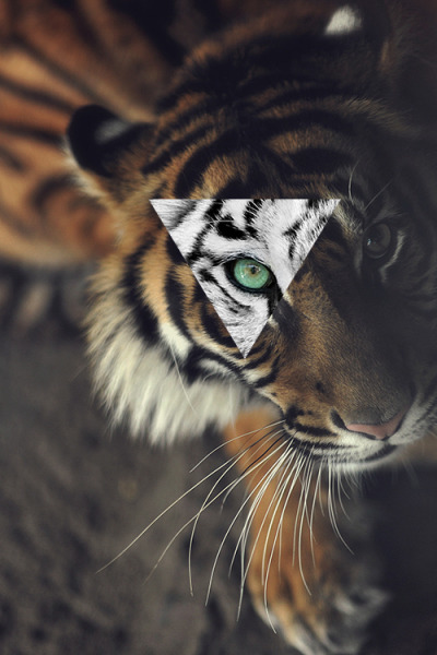 bitch-pleace-i-am-a-princess:  Eye of the Tiger en @weheartit.com - http://whrt.it/WywU7k