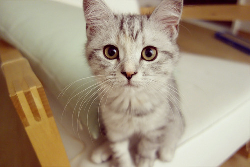 photogenicfelines:  (thealice.photo)
