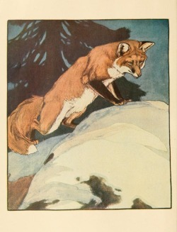 artofthewild:  Charles Livingston Bull (1913)