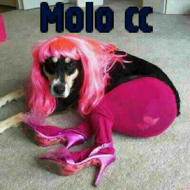 Ehh the things ppl do neh poor lil pup