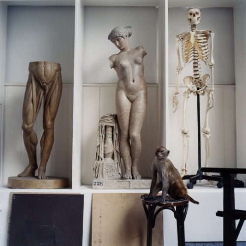 helds:  The Order of Things - Karen Knorr