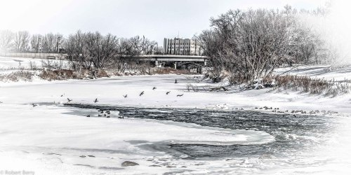 """Red River Geese""   For your daily dose of HDR this image of the Red River of the North as it slowing moves through downtown Fargo, ND. The geese were enjoying the warming water.  With the city now requesting one million sand bags in the next two weeks, this peaceful scene won't last long. Three exposer HDR processed in HDR Effects Pro and Lightroom 4 Nikon D80 with 18-135MM Nikkor lens."