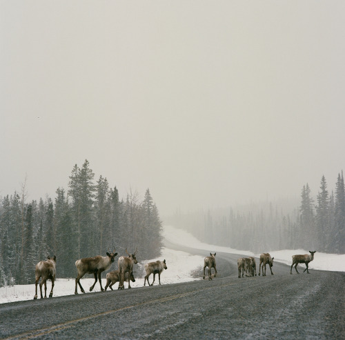 everydaydude:  Caribou British Columbia, Canada | 2013