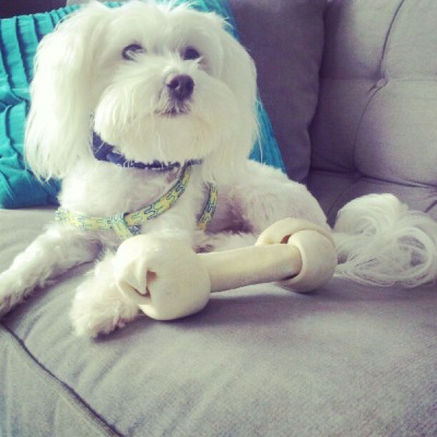 Living room #gay #maltese #bone #sizequeen (at 850 Piedmont Avenue - Dakota)