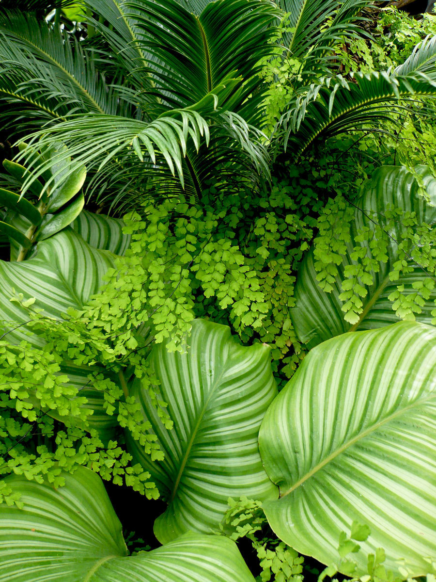 omgplants:  Sago Palm, Ferns and Hostas