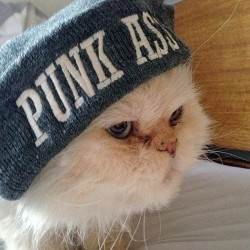 eddyseestars:  The Drop The Anchor grumpy cat reppin our punk ass beanie!