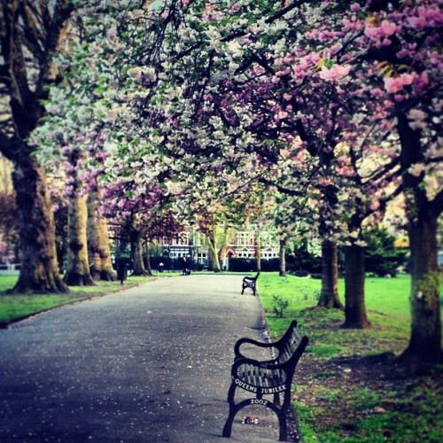 Spring in Vauxhall Park, London