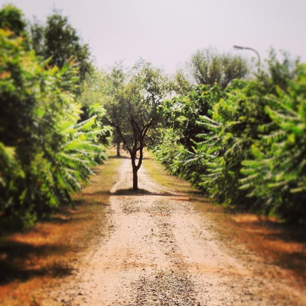 #path #road #roadtrip #sun #trees #shadow #green #yellow #dust #dusty #tree #nature #naturehippys #naturewhisperers #nature_obsession_landscapes #instanature #india #landscape #landscapelovers #beautiful #calm