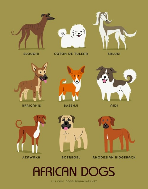 mymodernmet:  Illustrator Lili Chin's adorable series Dogs of the World illustrates 192 breeds of dogs grouped according to geographical origin.