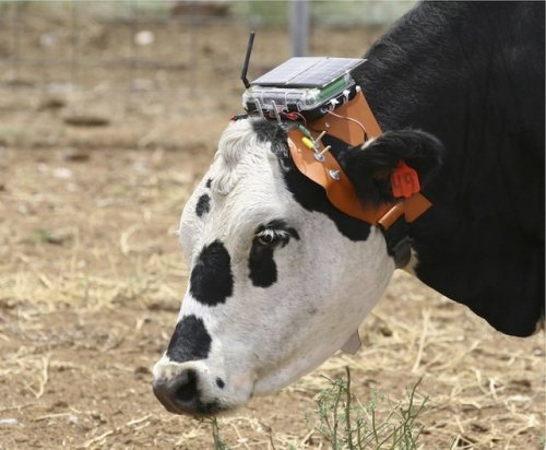 MOOOOOVE. futurescope:   The Future of Farming: GPS Sensors via Fast.Co:    FARMERS CAN CONTROL WHERE THEIR CATTLE AND SHEEP GRAZE FROM A COMPUTER WITH THIS EMERGENT TECHNOLOGY. A recent interview published by Nicola Twilley and Geoff Manaugh profiles a USDA scientist named Dean M. Anderson, whose research focuses on virtual fencing, a concept by which farmers could control their livestock using GPS-controlled electronic sensors (a bit like an electronic dog collar). The technology has the potential to make farms more environmentally sustainable, by allowing farmers to manage where their cattle graze, and to cut down on the manual labor involved with rebuilding fences.    [read more] [interview] [photo by mac schwager]