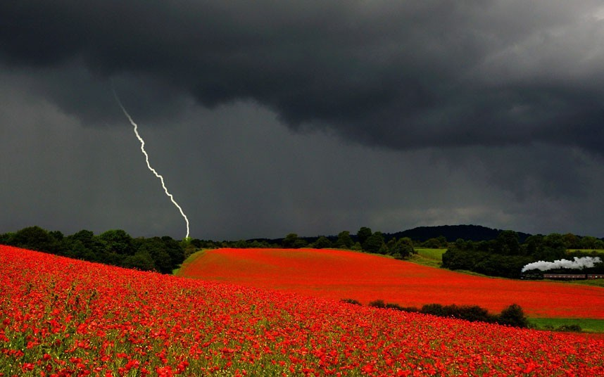 inothernews:  CRACK UP  Lightning strikes over poppy fields in Severn Valley, England, in this award-winning photo by Danny Beath — who died of a heart attack before contest organizers could inform him of his prize. (Photo: Danny Beath / Newsteam via The Telegraph)