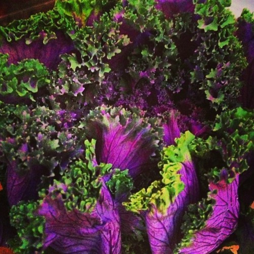 Beautiful American kale ! Good find today at the grocery :) #happiness #healthyhabits #cleaneats #foodbyaua #organic #food #yummy