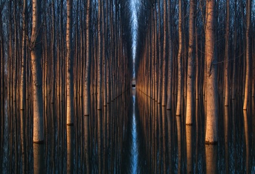 apairofblueeyes:  Amazing Landscapes Featuring Rows of Symmetrical Trees by oliver delgadov