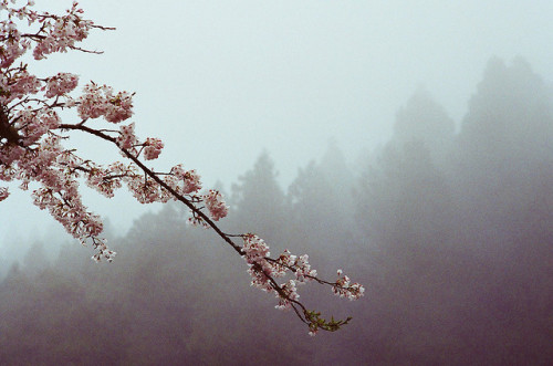dreams-of-japan:  untitled by deader than yesterday on Flickr.