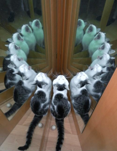 thetcwashere:  How to summon the cat beast